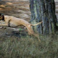 Salty Sea Dog Triathlon – September 2016